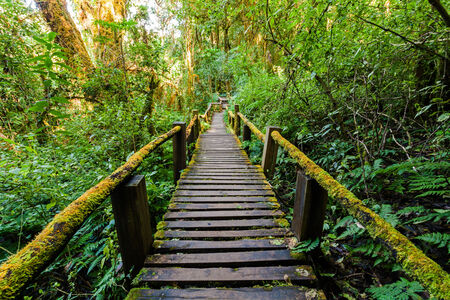 Wooden bridge at angka nature trail in doi inthanon national park, Thailand photo
