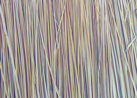 palmyra palm: Dead Leaves of Asian Palmyra palm tree background Stock Photo