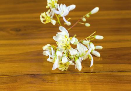 oleifera: flores de moringa (Moringa oleifera Lam.) de madera Foto de archivo