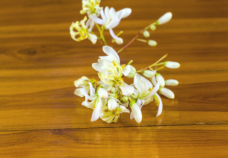 laxatives: flowers  of Moringa (Moringa oleifera Lam.) on wooden Stock Photo