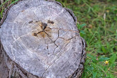 sadly: Taglio di vecchio e crack di legno tristemente uso forma del viso per uno sfondo e la trama