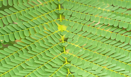 bracken: pattern of Small Bracken Leaves use for background