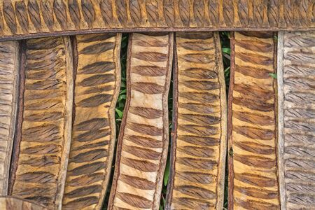 pattern made from dried  Caesalpinia pulcherrima sheath tree use for background photo