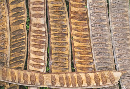 sheath: pattern made from dried  Caesalpinia pulcherrima sheath tree use for background