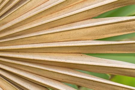 dried up: Dried sugar palm leaf background