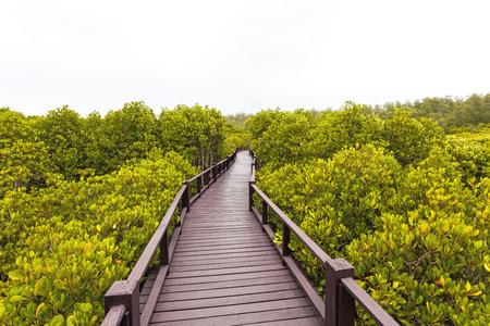 unwanted flora: Wooden bridge the forest mangrove at Petchaburi, Thailand Stock Photo
