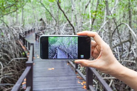 unwanted flora: Hand of girl taking pictures on a mobile phone in wooden bridge the forest mangrove at Petchaburi, Thailand