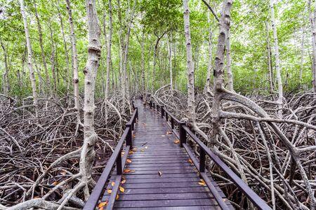 lightsome: Wooden bridge the forest mangrove at Petchaburi, Thailand Stock Photo