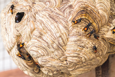 Close up  wasp nest