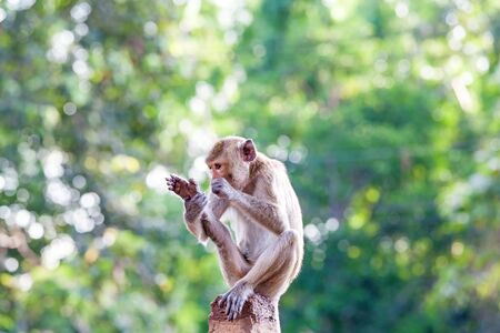 fleas: Monkeys checking for fleas and ticks on concrete fence in the park