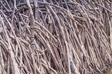 lightsome: The forest mangrove at Petchaburi, Thailand Stock Photo