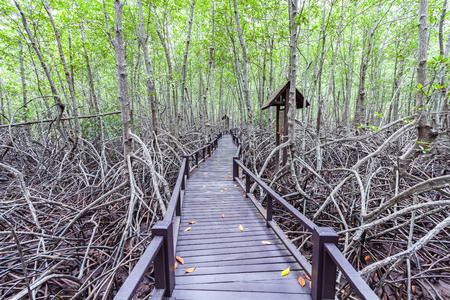lightsome: Wooden bridge the forest mangrove at Petchaburi, Thailand Stock Photo