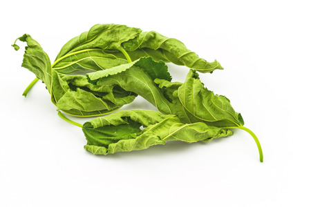 Dry mulberry leaves for medical use on white background Banque d'images