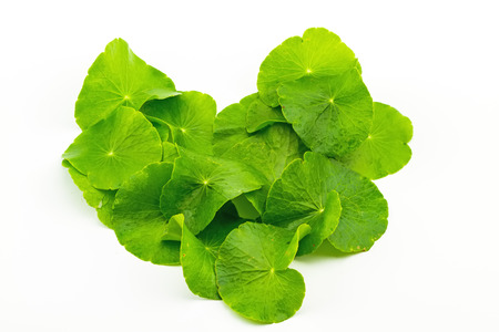 longevity medicine: Heart shape of Green Asiatic Pennywort leaf Centella asiatica  on white background Stock Photo