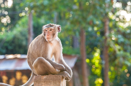 Portrait of young monkey be inattentive and sitting at the concrete fence Stock Photo - 48483084
