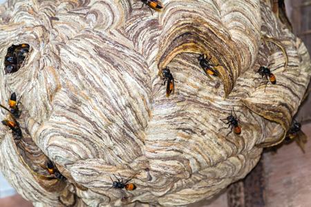 stingy: Close up  wasp nest