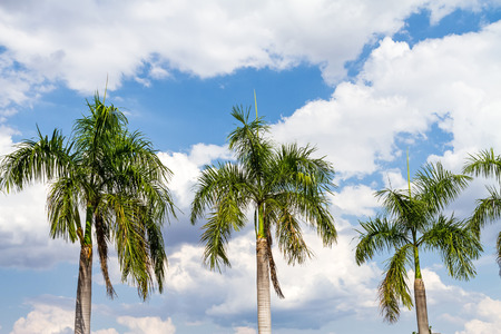 waft: Blue sky and green palm tree background