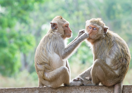 heed: Monkeys checking for fleas and ticks in the park