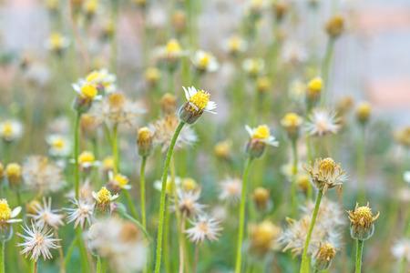 veronica flower: beautiful glass flower in field