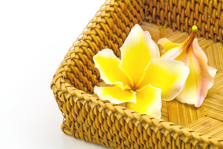 spp: frangipani flowers Plumeria spp , Apocynaceae, Pagoda tree, Temple tree in brown basket bamboo weave on white background