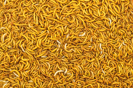mealworm: Close up mealworm feed for animals in the  market