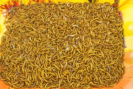 mealworm: Close up mealworm feed for animals on orange tray in the  market