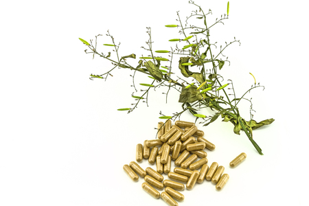 plant drug: Dry of Andrographis paniculata plant and yellow drug pill on white background