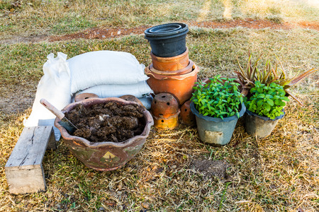 plant pots: Plant pots with vegetables and herbs and watering canplantingplant pots  plant jardiniere Stock Photo
