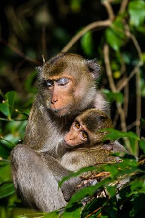 simian: monkey  family in the park