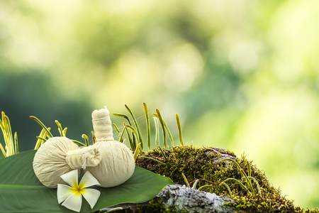 Spa herbal compressing ball , white frangipani flowers (Plumeria spp , Apocynaceae flower, Pagoda tree flower, Temple tree flower) in green leaf on moss waterfall at the mountain.