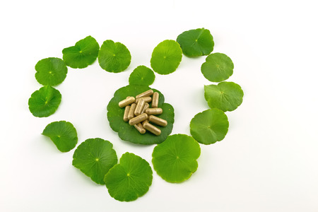 longevity drugs: Heart shape of green Asiatic Pennywort (Centella asiatica , Hydrocotyle umbellata L or Water pennywort ) and colorful pill  on white background