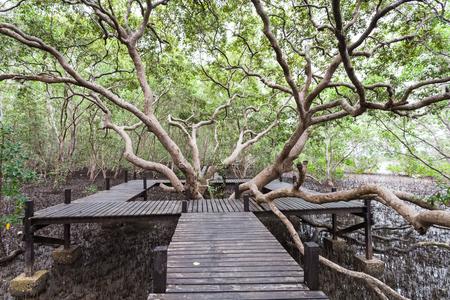 Big tree and wooden bridge at Tung Prong Thong,Golden Mangrove Field,Pra Sae, Rayong, Thailand.