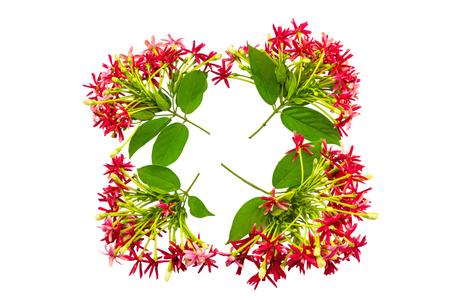 Colorful flower Drunen sailor, Rangoon creeperQuisqualis Indica flower plant , Chinese honeysuckle, Rangoon Creeper, Combretum indicum on white background. Фото со стока
