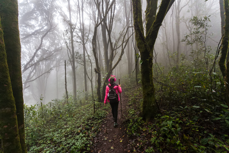 Young woman wearing hardshell waterproof pink jacket, trekking shoes and backpack exploring stunning autumn foggy forest in mountains - nature lovers, hiking or adventure concept