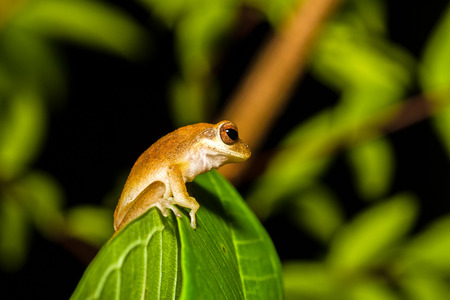 Close up golden tree frog on tree