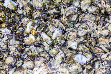 Close up pattern of oyster on the sea