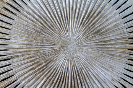 Close up blurry of circle wooden pattern Banco de Imagens