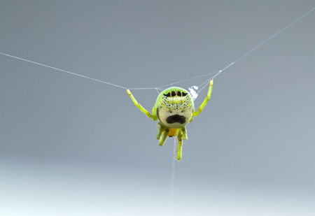 Blurry small green spider in spider web  with white Banco de Imagens