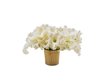 Close up white flower Dolichandrone serrulata in vase on white background. Stock Photo