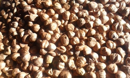 goody: Hazelnuts in the foreground.