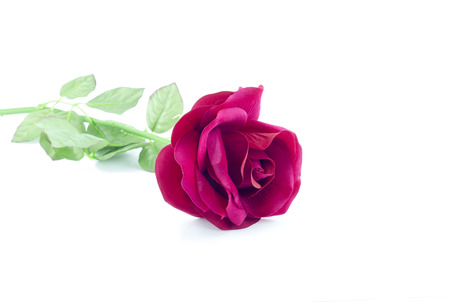 spurious: counterfeit red rose on isolate white bacground Stock Photo