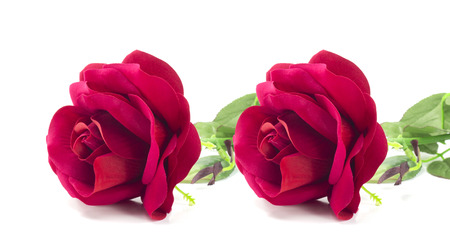 spurious: two counterfeit red rose on isolate white background