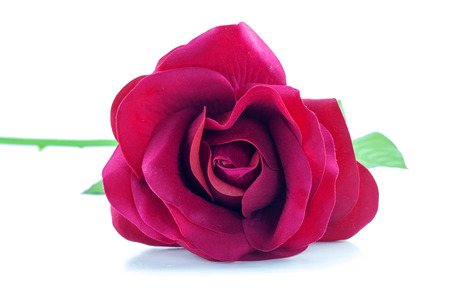 spurious: counterfeit red rose on isolate white background