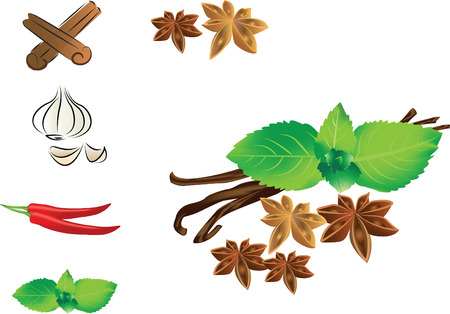 natural drying: Highly detailed herbs and spices icons set