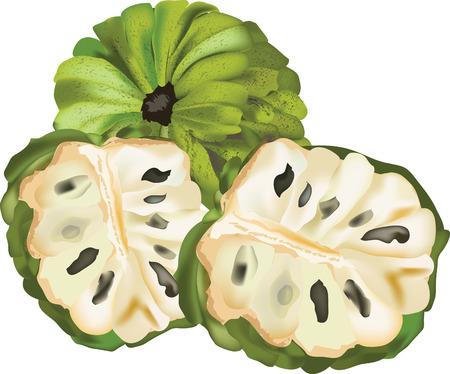 custard: thai fruit custard apple of fresh