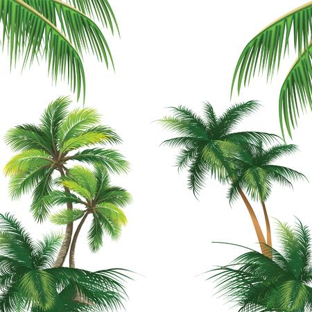 Patrón con palmeras de coco vectorial Foto de archivo - 47674865