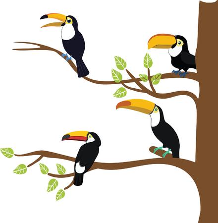 hornbill: hornbill animal bird vector