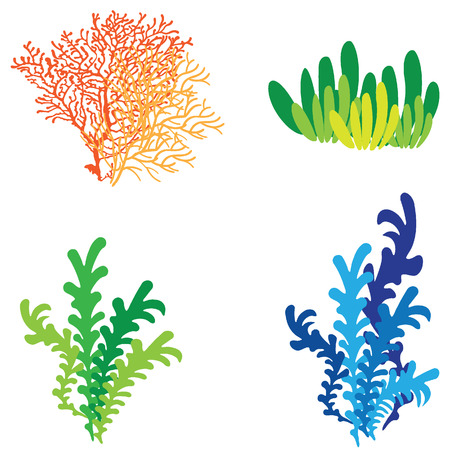 coloful: vector coral reef coloful