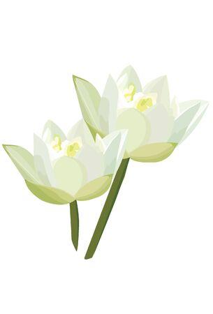 white lotus flowers Illustration