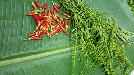 Climbing Wattle Acacia Pennata Stock Photo